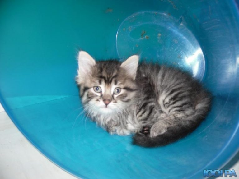 Chaton a donner finistere