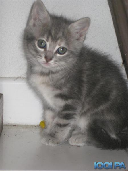Chaton a donner vaucluse