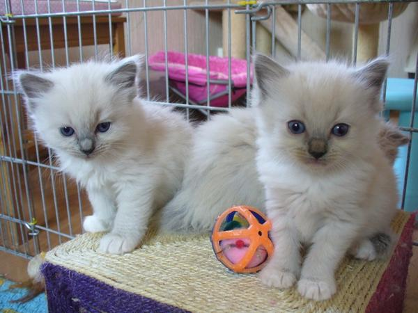 Chatons a donner 06