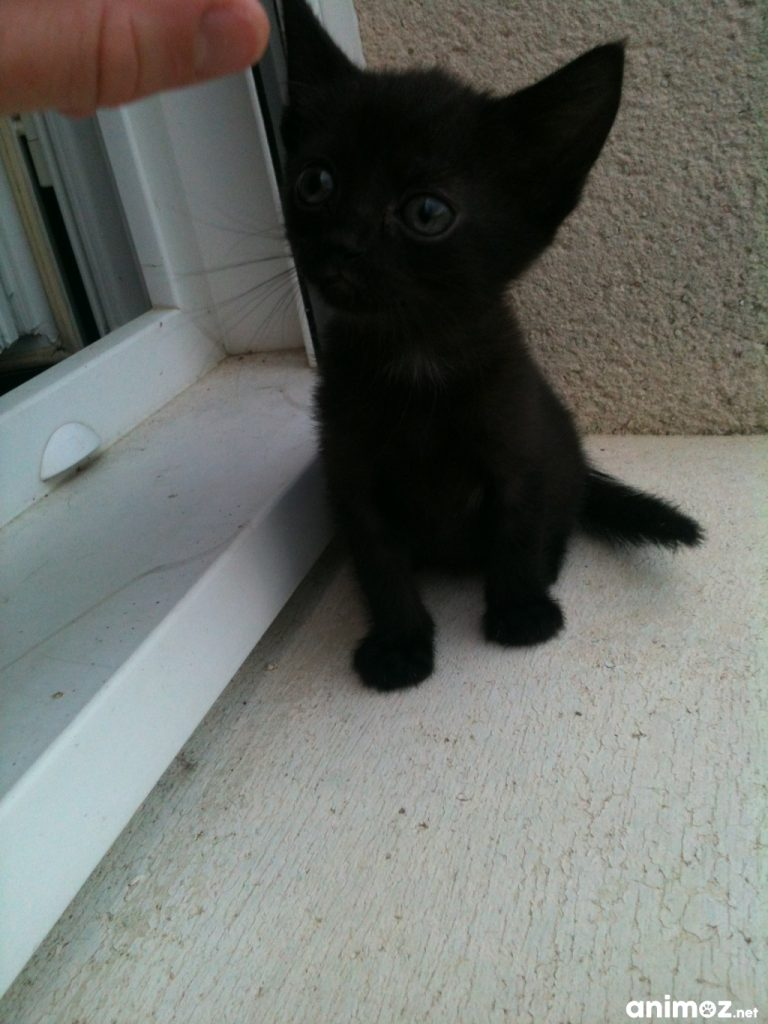 Chatons a donner 44