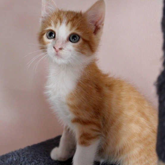 Chaton a donner 91