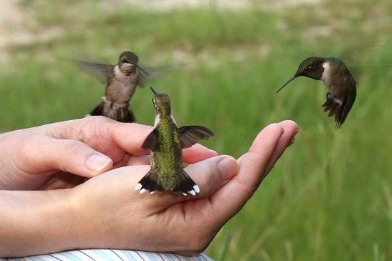 Oiseaux a donner