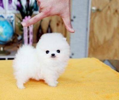 Cherche petit chien