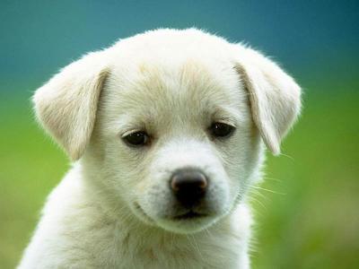 Petit chien à donner