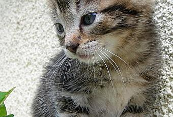 Chaton a donner 06