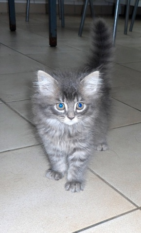 Chaton a donner 74