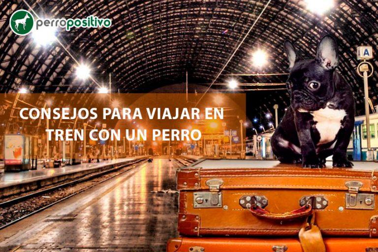 Conseils pour voyager en train avec un chien