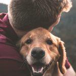 Dog Training, influence du facteur humain