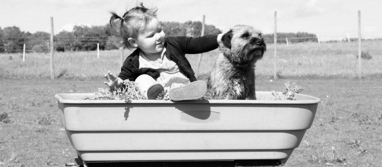 Dog Training: Le transport, un outil pédagogique