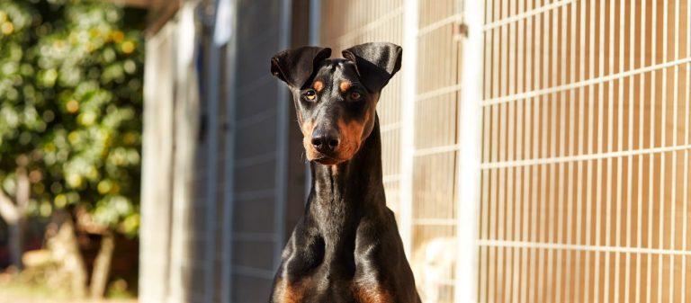 Nos clients pensent à notre résidence canine