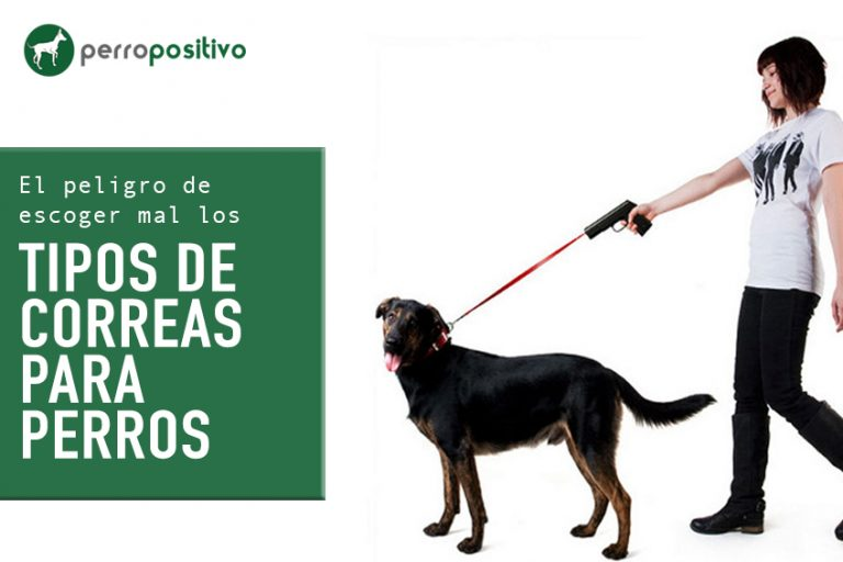 Le danger de choisir les types de laisses pour chiens