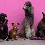 Entraînement canin en groupe