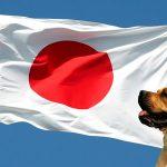 Races de chiens asiatiques