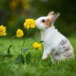 4 conseils pour que votre lapin vive plus longtemps