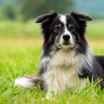 Top 13 races de chiens