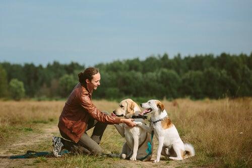 Réglementation sur les chiens en liberté sur le terrain