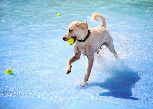 Règles de base pour les piscines pour chiens