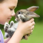 Les lapins mangent-ils leurs excréments?