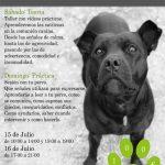 Séminaire: comment les chiens communiquent