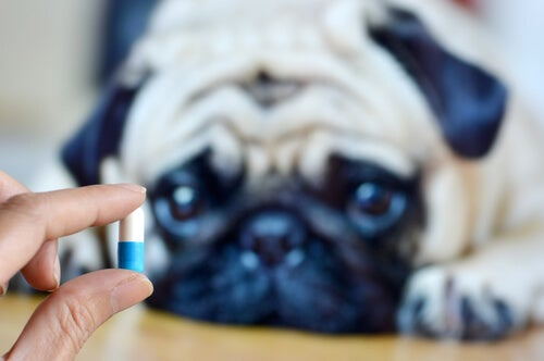 6 raisons de donner des suppléments de magnésium chez le chien