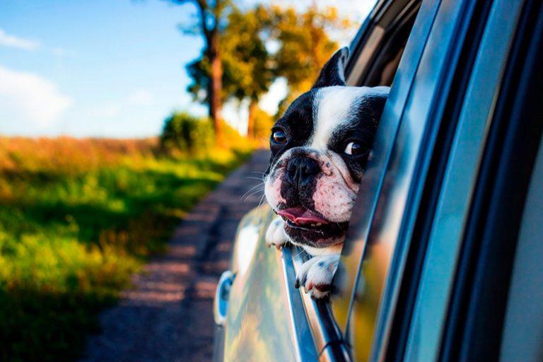 Mon chien est pris de vertige dans la voiture. Que faire?