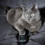 4 raisons du comportement nocturne des chats