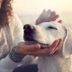 Comportements des chiens quand nous les caressons