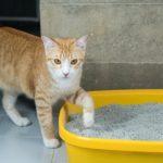 Les chats allergiques à la litière, que faire?