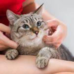 Conseils pour savoir qu'un chat est en bonne santé