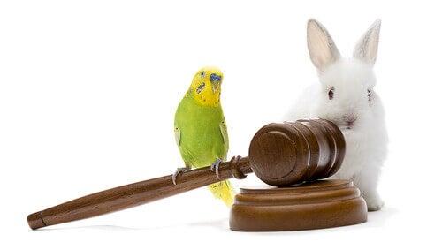 Lois sur la protection des animaux dans le monde