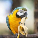Quels aliments puis-je donner à mon perroquet?