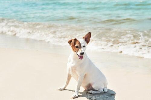 Obligations légales d'un propriétaire d'animal sur la plage