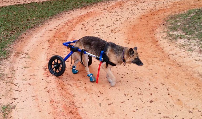 Tout sur les fauteuils roulants pour chiens