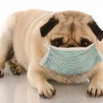 Problèmes de santé canins causés par des environnements sales