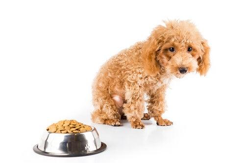 6 raisons pour lesquelles un chien ne grossit pas