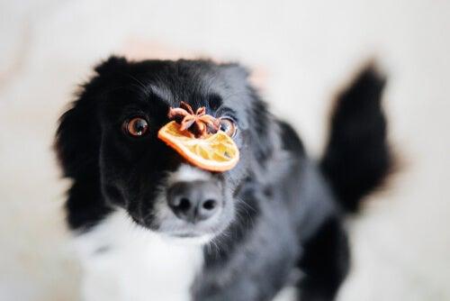 Importance des antioxydants dans les aliments pour chiens