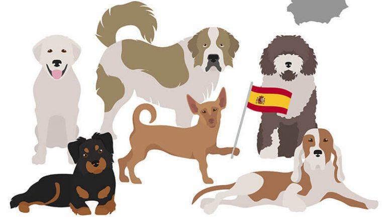 Principales associations espagnoles de défense des droits des animaux