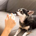 Tout ce que vous devez savoir sur les prébiotiques canins