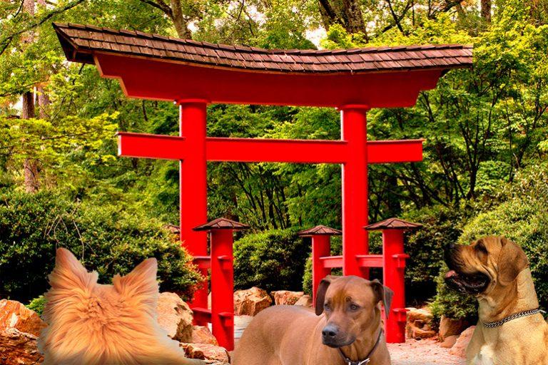 Noms des chiens en japonais et leur signification