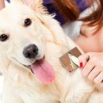 5 raisons de brosser régulièrement votre chien