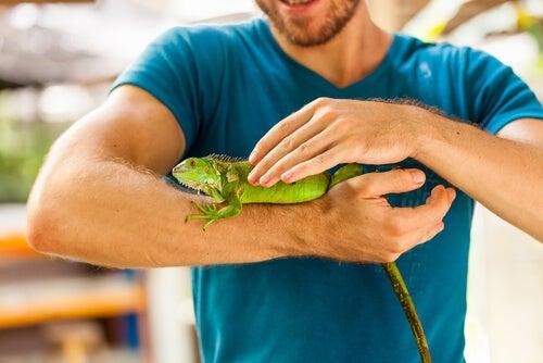 Les reptiles ont-ils des champignons?