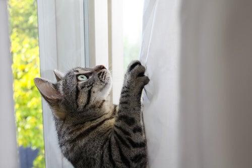 Pourquoi les chats sont-ils si agiles et flexibles?