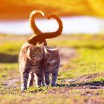 Le langage de la queue de chat