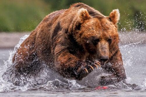 Animaux sauvages dans notre code pénal