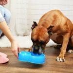 Les chiens peuvent-ils manger des lentilles?