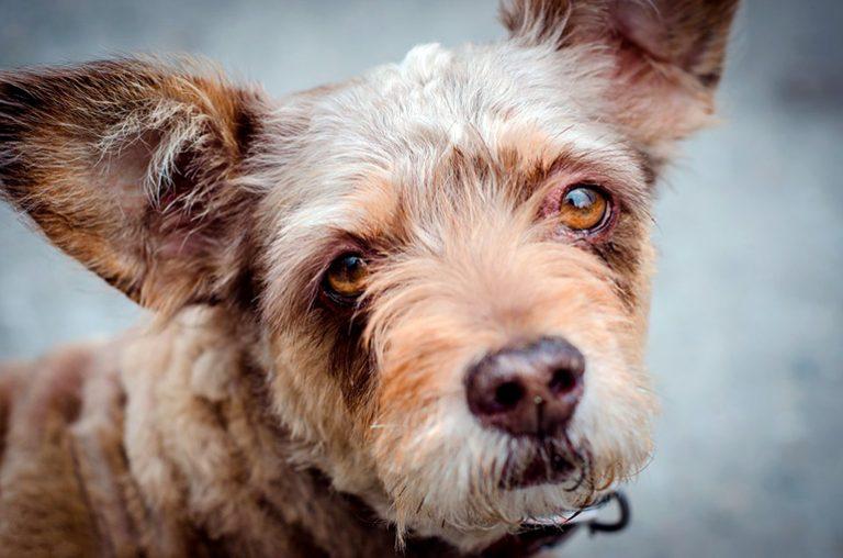Épilepsie chez le chien – Symptômes, traitement et action