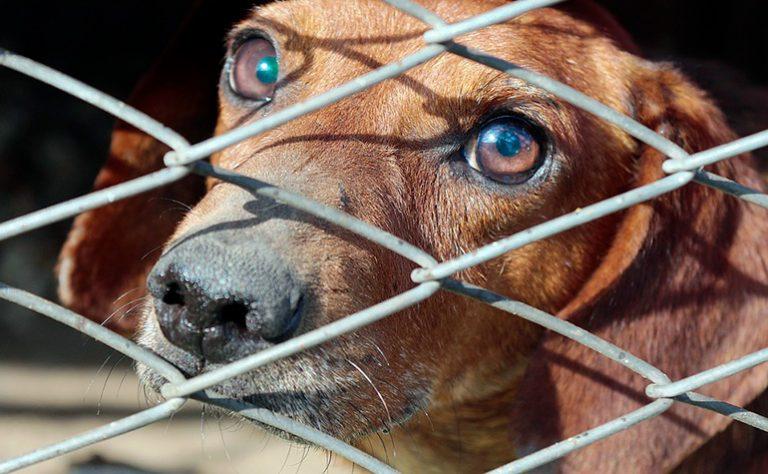 Combien coûte l'adoption d'un chien? En chenil et protecteur