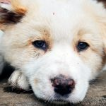 À quelle fréquence un chien doit-il être vermifugé?