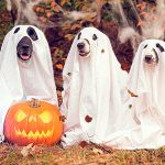 Déguiser un chien à l'Halloween ou au Carnaval - Avantages et inconvénients
