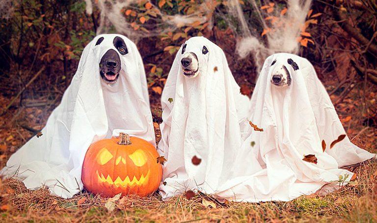 Déguiser un chien à l'Halloween ou au Carnaval – Avantages et inconvénients